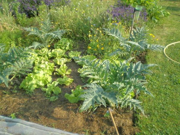 Juillet 2013 engrais vert - Engrais vert d automne ...